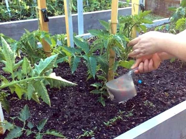 поливать растения сахаром